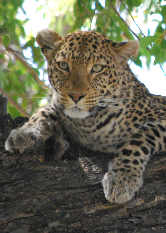private luxury tours africa
